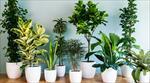 پاورپوینت-گیاهان-آپارتمانی